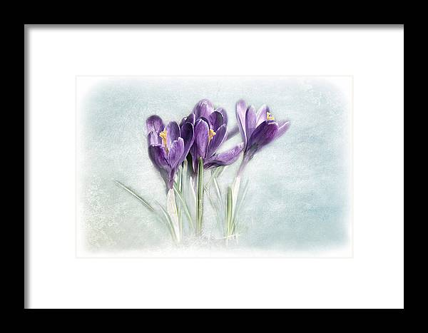Flower Framed Print featuring the photograph Still Life by Heike Hultsch