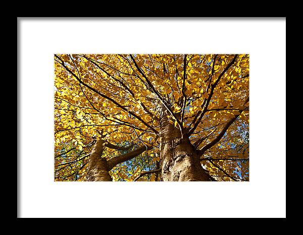 Landscapes Framed Print featuring the photograph Forest by Jean Schweitzer