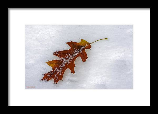 Autumn Framed Print featuring the photograph A Moment Together by Bill Sherrell