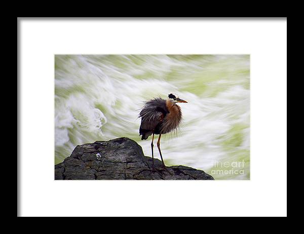 Nature Framed Print featuring the photograph All Shook Up by Rrrose Pix