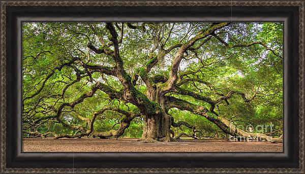 Angel Oak Tree of Life by Dustin K Ryan