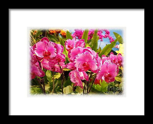 Phalaenopsis Framed Print featuring the photograph Beautiful Array Of Purple Butterfly Orchids by Yali Shi