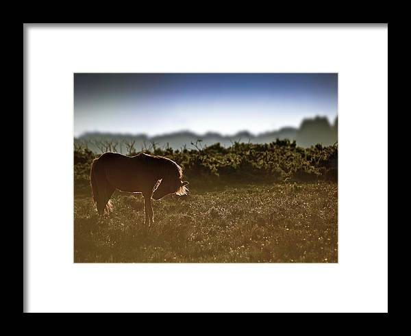 New Forest Pony Framed Print featuring the photograph Beautiful Image Of New Forest Pony Horse Backlit By Rising Sun I by Matthew Gibson