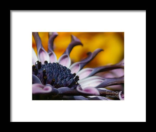 Flower Framed Print featuring the photograph Beautiful by Line Gagne
