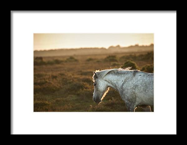 New Forest Pony Framed Print featuring the photograph Beauttiful Close Up Of New Forest Pony Horse Bathed In Fresh Daw by Matthew Gibson