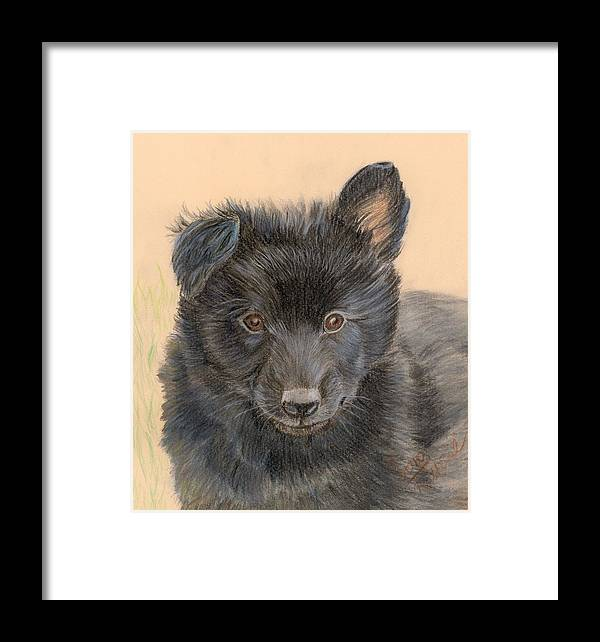 Animals Framed Print featuring the painting Belgian Sheepdog Puppy by Ruth Seal