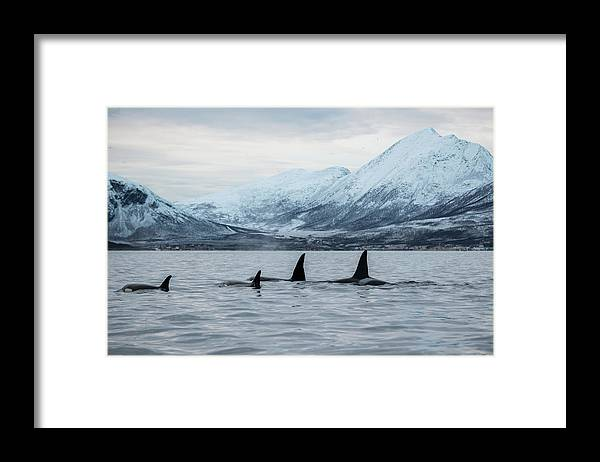 Snow Framed Print featuring the photograph 2 Big 2 Small by By Wildestanimal