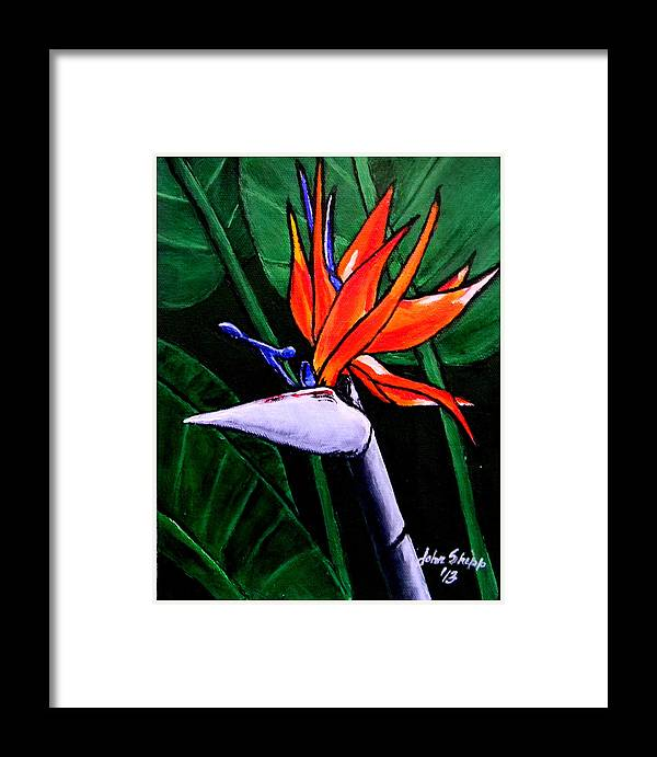 Bird Of Paradise Framed Print featuring the painting Bird Of Paradise by John Shipp