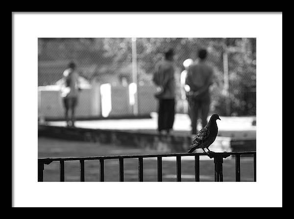 Bird Watcher Framed Print featuring the photograph Bird Watcher by Gregory Alan