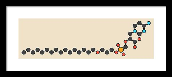 Brincidofovir Framed Print featuring the photograph Brincidofovir Antiviral Drug Molecule by Molekuul