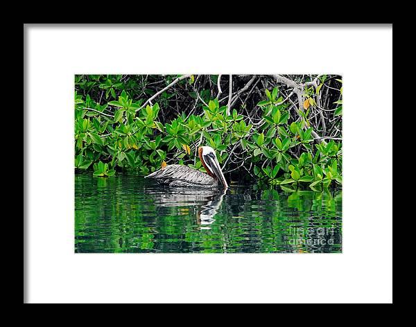 Ecuador Framed Print featuring the photograph Brown Pelican by Fabian Romero Davila