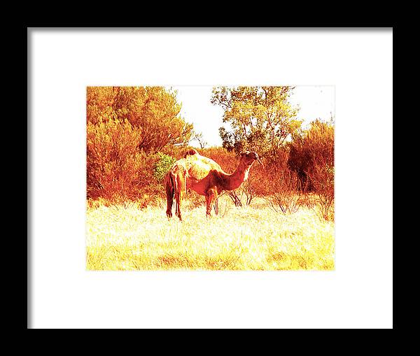 Camel Framed Print featuring the photograph Camel by Girish J