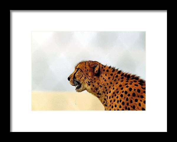 Cheetah Framed Print featuring the photograph Cheetah by James Stough
