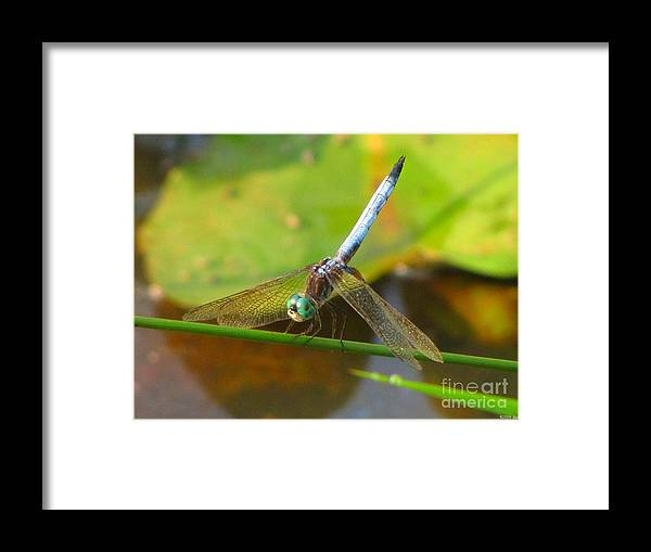 Dragonfly Framed Print featuring the photograph Dragonfly by Rrrose Pix