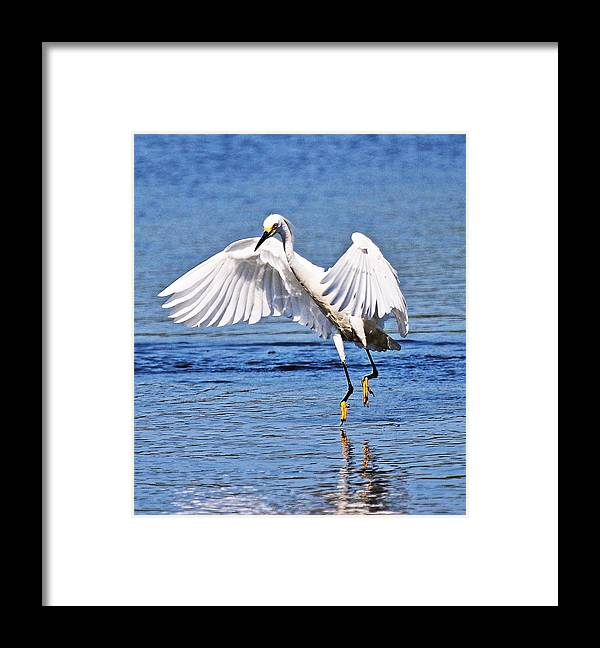 Egret Framed Print featuring the photograph Egret by DVP Artography