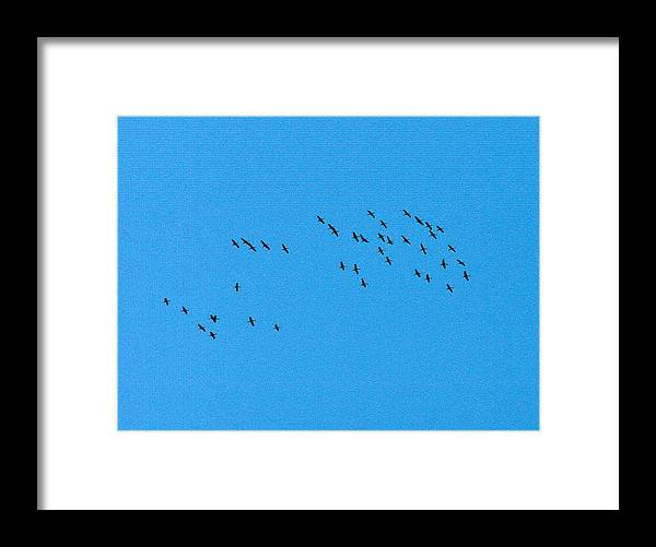 Eurasian Crane Framed Print featuring the photograph Eurasian Cranes by Jouko Lehto