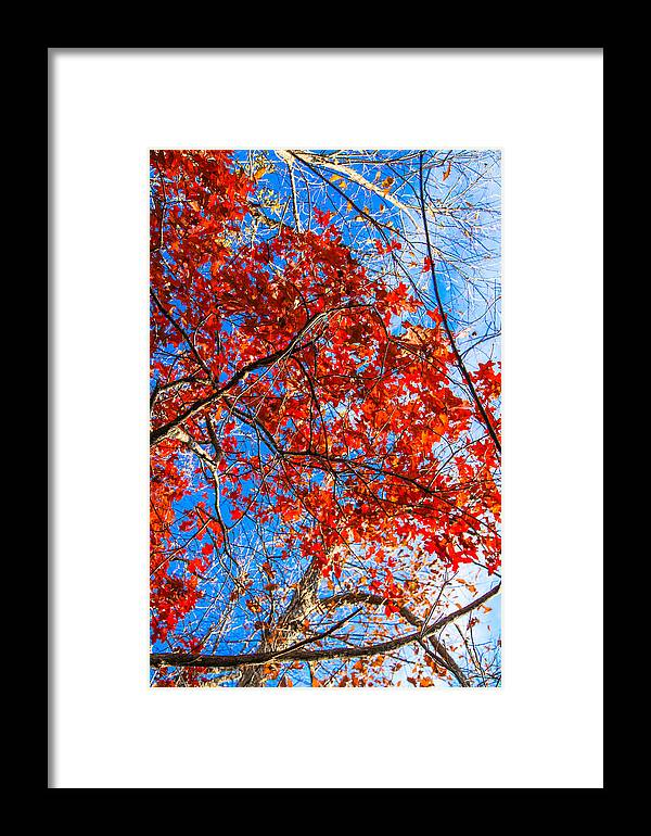 Landscape Framed Print featuring the photograph Fall Colors by Tinjoe Mbugus