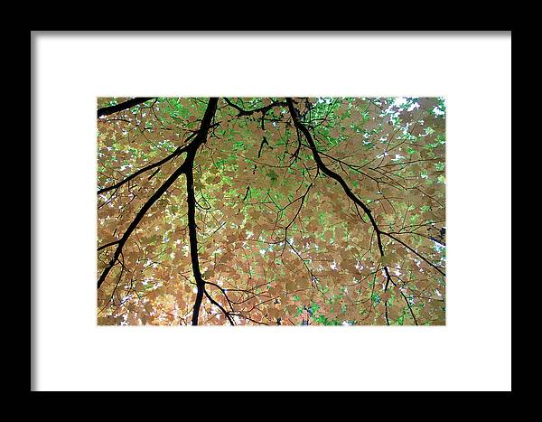 Fall Framed Print featuring the photograph Fall Tree by Valentino Visentini