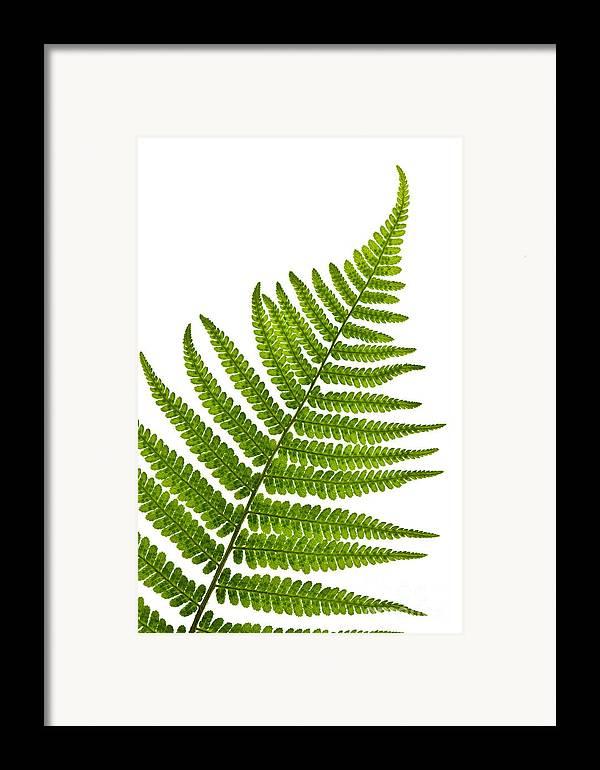 Fern Framed Print featuring the photograph Fern Leaf by Elena Elisseeva