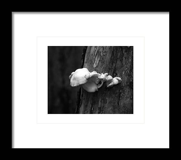 Natures Oddity's Framed Print featuring the photograph Fungi Glspla474 by G L Sarti