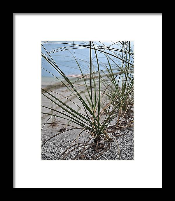 Swflsunsetscenery Framed Print featuring the photograph Grass by Tracy Barnard