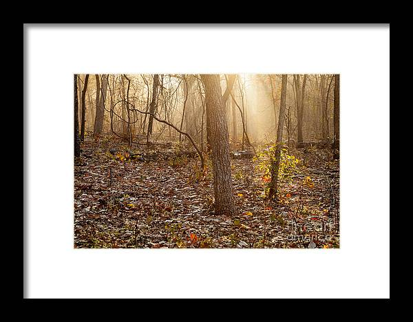 Forest Framed Print featuring the photograph Hope by Iris Greenwell