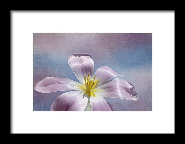 Pink Flower Framed Print featuring the photograph Inner Glow by Kim Hojnacki
