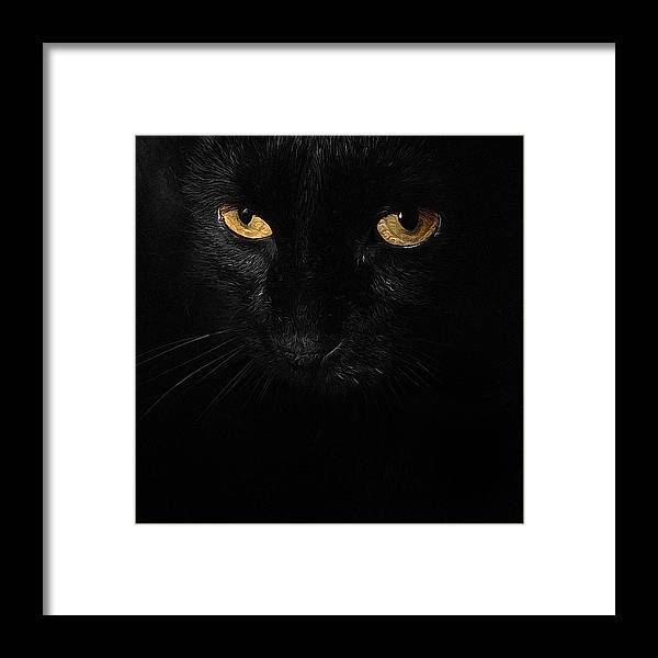 Cat Framed Print featuring the photograph Le Chat Noir by Natasha Marco