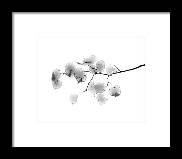 Black And White Framed Print featuring the photograph Leaves In Black And White by John Henkel