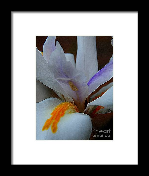 New Orleans Photography Framed Print featuring the photograph Louisiana Iris by Michael Hoard