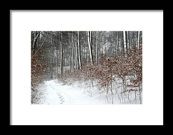 Forests Framed Print featuring the photograph Nature In Winter Under Snow In Denmark by Jean Schweitzer