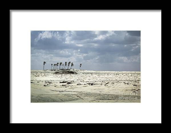 Abstract Framed Print featuring the photograph Palm Trees by Isabel Poulin