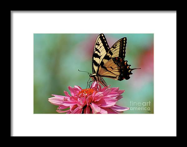 Butterfly Framed Print featuring the photograph Pastel by Lois Bryan