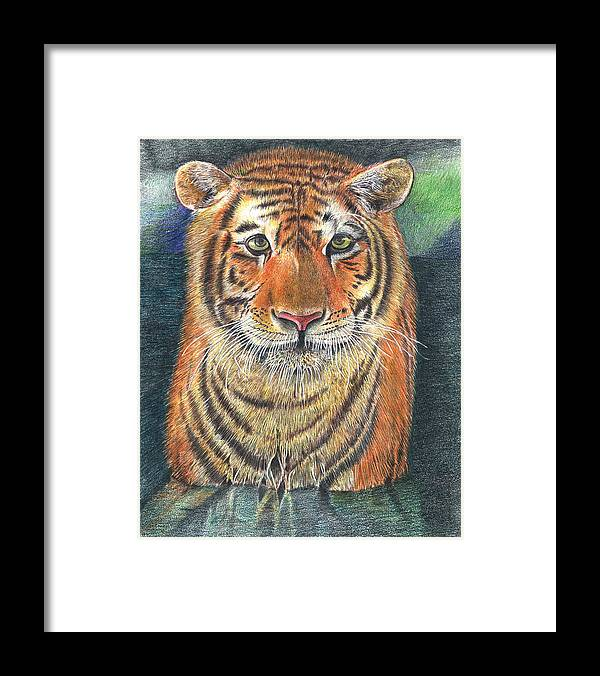 Tiger Framed Print featuring the drawing Patient Hunter by John Hebb