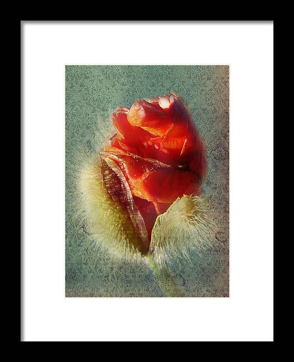Colorful Flowers Framed Print featuring the photograph Poppy by Heike Hultsch