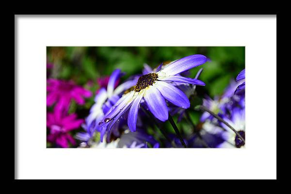 Flower Framed Print featuring the photograph Purple Flower by Barbara Walsh