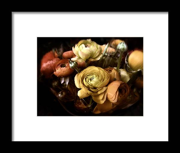 Flowers Framed Print featuring the photograph Ranunculus by Jessica Jenney