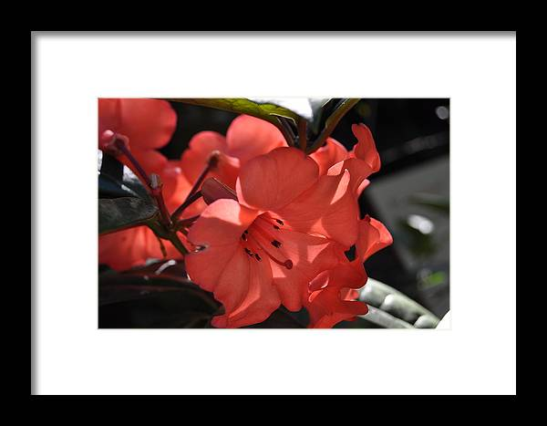 Nice Beatiful Colors Red Flowers Photography Summer Sweden Framed Print featuring the photograph Red Flowers by Stefan Pettersson