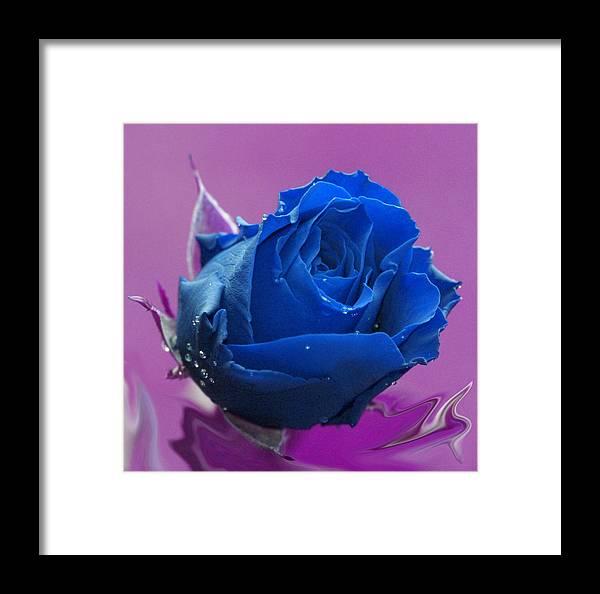 Blue Framed Print featuring the digital art Rose by Carol Lynch