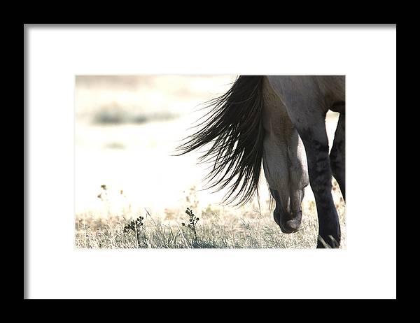Sundowner Framed Print featuring the photograph Sundowner by Lourie Zipf