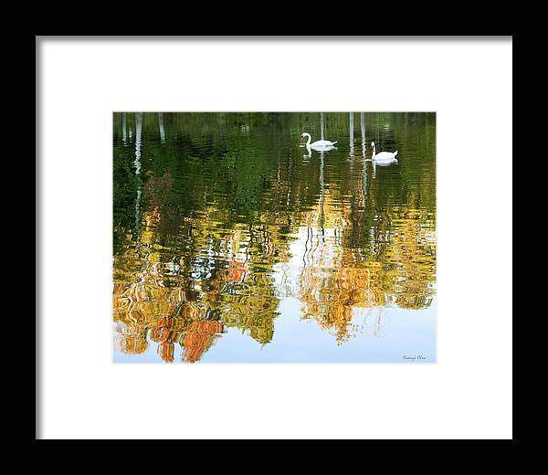 Swan Framed Print featuring the photograph Swan Lake by Nian Chen