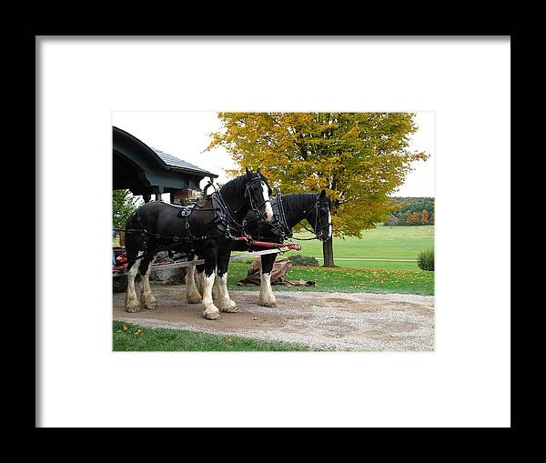 Horses Framed Print featuring the photograph Team Work by Barbara McDevitt