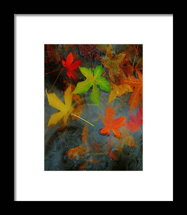 Nature Framed Print featuring the photograph The Silent Percussion by Charles Lucas