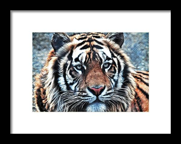 Tiger Framed Print featuring the photograph Tiger by Steve McKinzie