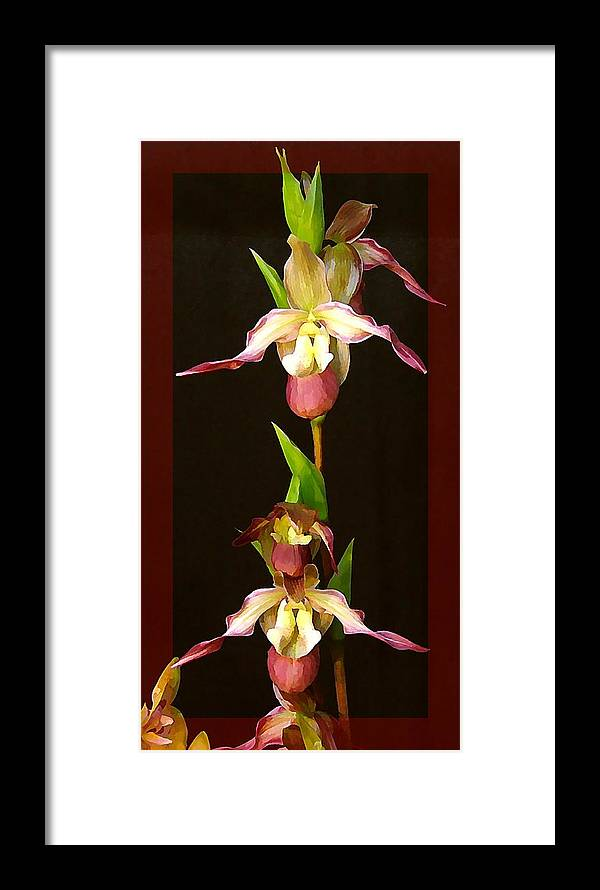 Orchids Framed Print featuring the photograph Tropical Orchids by Mindy Newman
