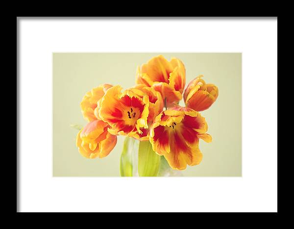 Tulpe Framed Print featuring the pyrography Tulips by Steffen Gierok