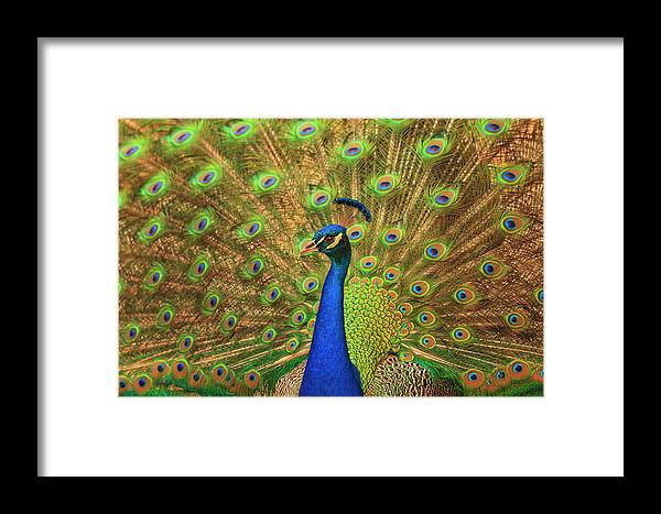 Animal Framed Print featuring the photograph Usa, Florida, St by Joanne Wells