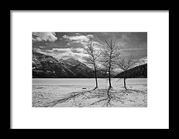 Three Trees Framed Print featuring the photograph Winter Trees by Inge Riis McDonald