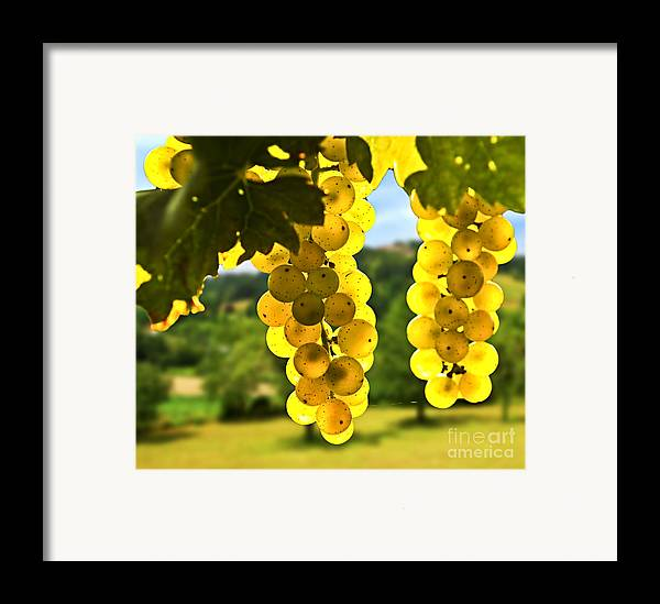 Green Framed Print featuring the photograph Yellow Grapes by Elena Elisseeva