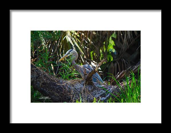 Canvas Framed Print featuring the photograph 2014 05 16 01 B 0652 by Mark Olshefski